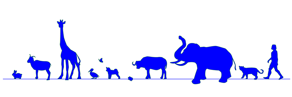 Walking animals