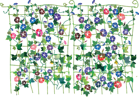 Flower series Asagao curtain