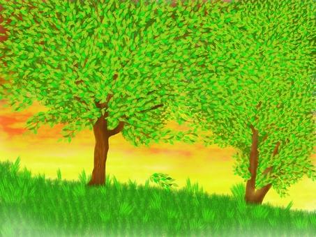 Trees natural landscape sunset