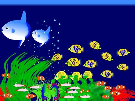 More playing aquarium