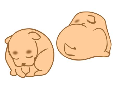 A nap dog
