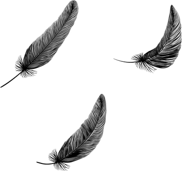 Feather _ silhouette