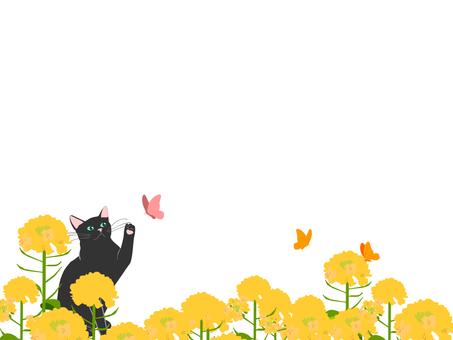 Rape flower field and cat