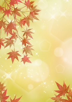 Autumn leaves of a maple