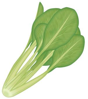 Komatsuna 1 / Vegetable