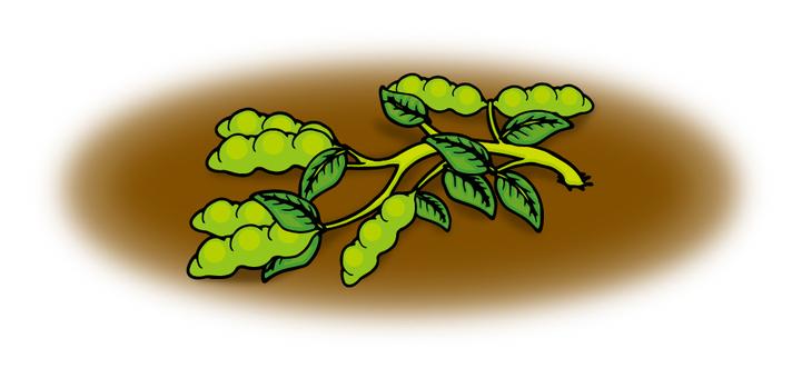 Soybean / collapsed seedlings