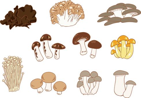 Edible mushroom 10 piece set