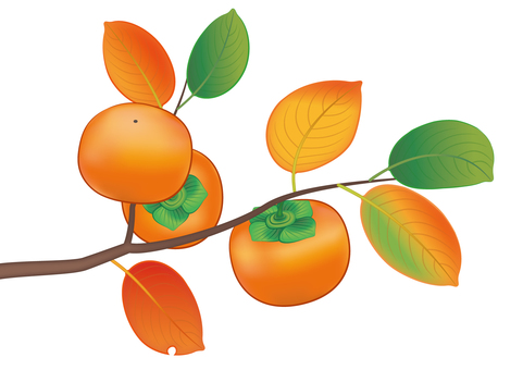 Persimmon nut and autumn leaves