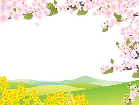 Sakura 21