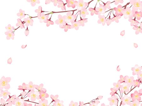 Sakura frame 04 / Hand-drawn transparent PNG