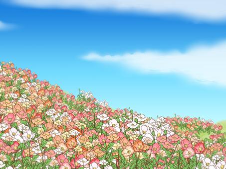Poppy's flower garden