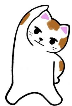 Cat gymnastic front