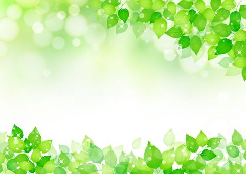 Fresh green 292