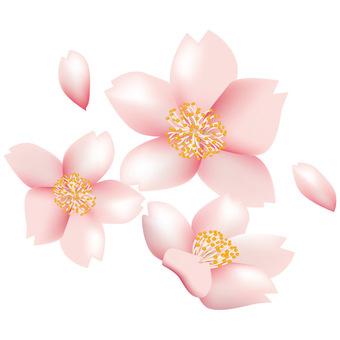 Spring · Sakura · Sakura 02