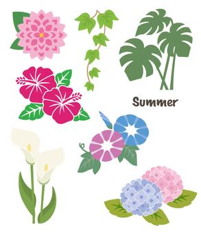 Summer flowers summary