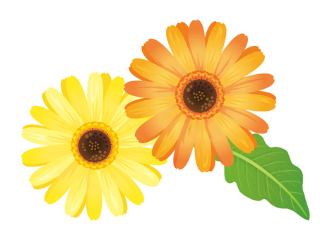 Yellow and orange gerbera flower clipping