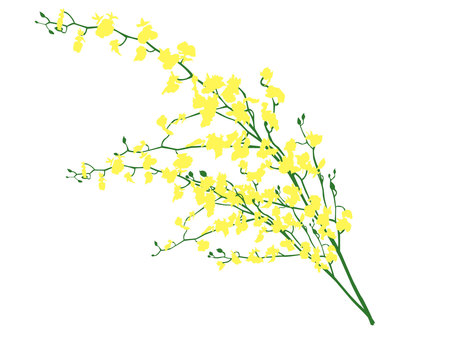 Cut yellow flowers