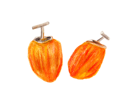 Dried persimmon (color pencil drawing)