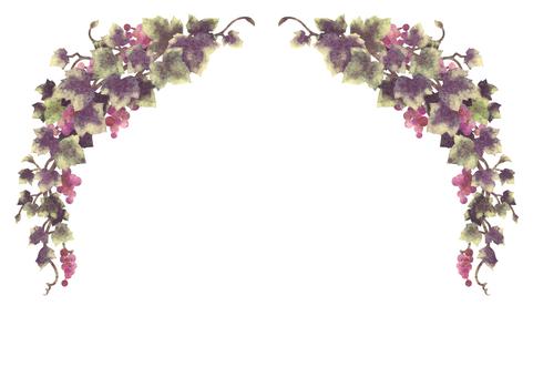 Grape illustration frame 06-2 (no line)