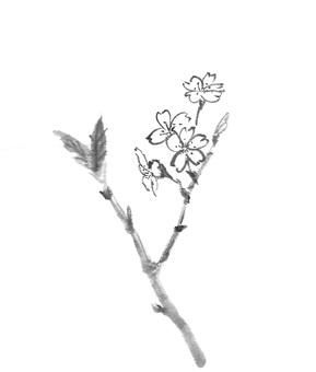 벚꽃 수묵