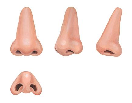鼻子4方向