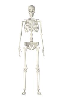 Skeleton_Front _ 001