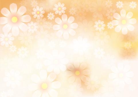 Flower pattern Cosmos 24