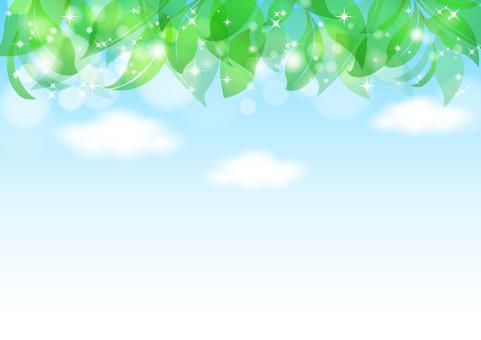 Fresh green material 54