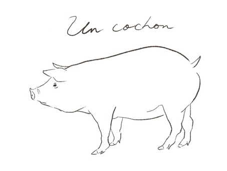 Pig's line drawing illustration