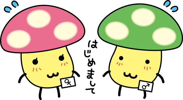 Discover mushrooms