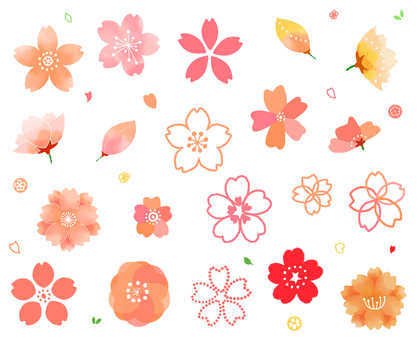 櫻花各種各樣