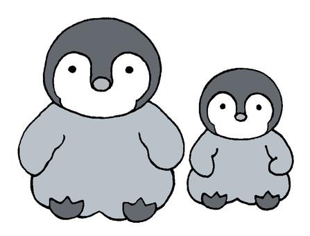 Penguin chicks lining up