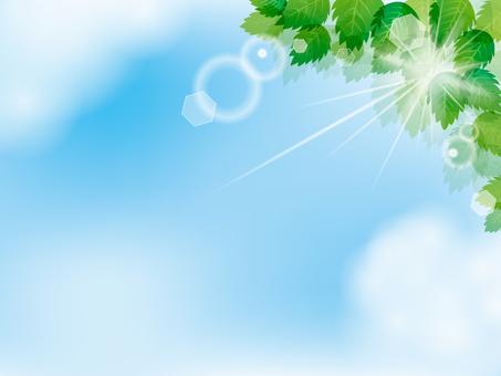 Summer image 022