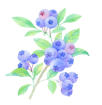 Blueberry ★ 0367-F
