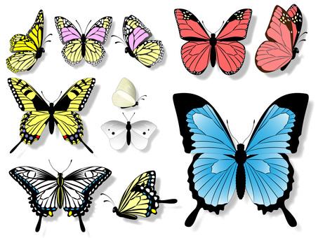 11 butterflies