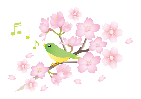 Birds singing on a cherry-blossoming branch