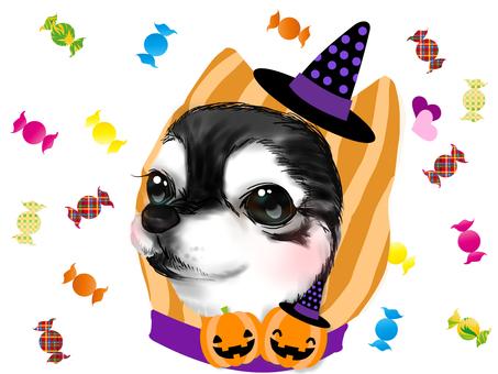 Chihuahua (Halloween costume)
