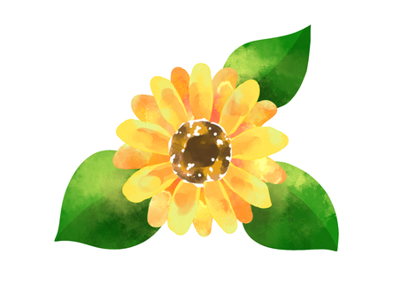 Watercolor material of sunflower (sunflower)