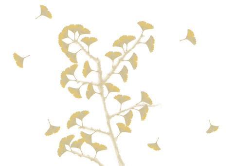 Ginkgo biloba (white background)