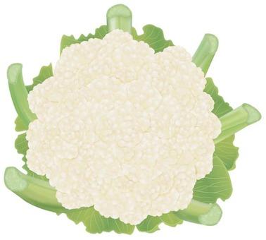 Cauliflower / Vegetable