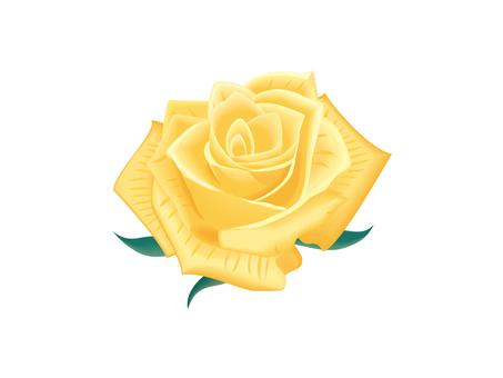 노란 장미 꽃