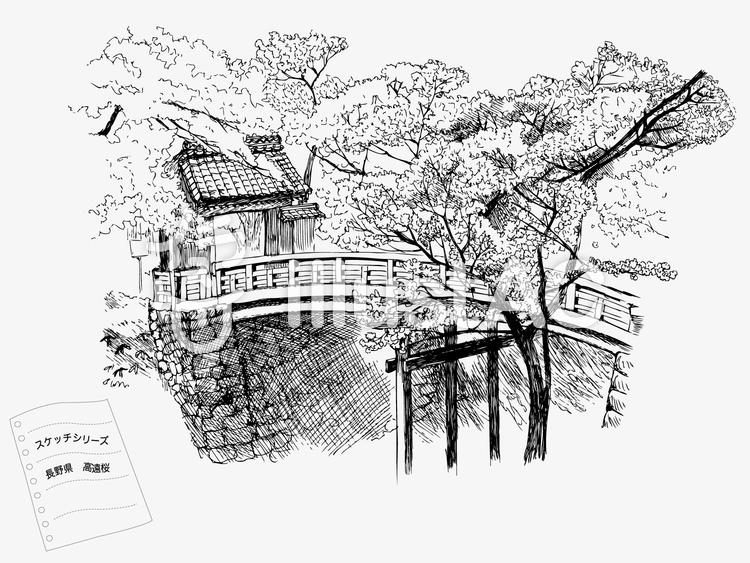 高遠城址公園桜のイラスト