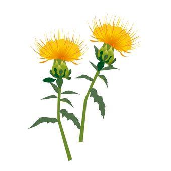 Beni Flower