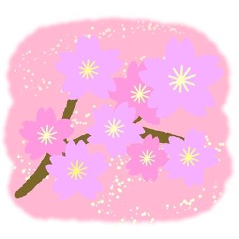 벚꽃 지점 ②