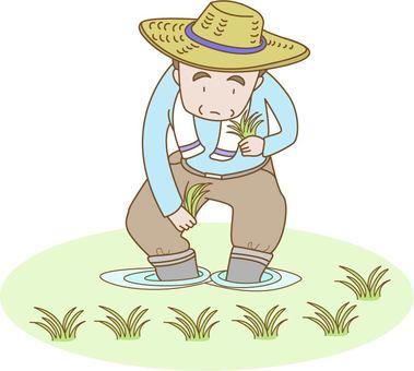 A man who plants rice