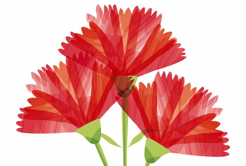 Carnation up