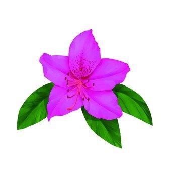 분홍색 철쭉