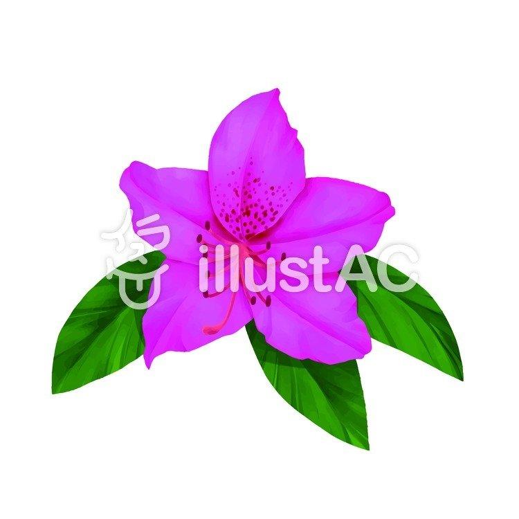 486118ffc Free Cliparts : Azalea up pink flour bloom - 325083 | illustAC