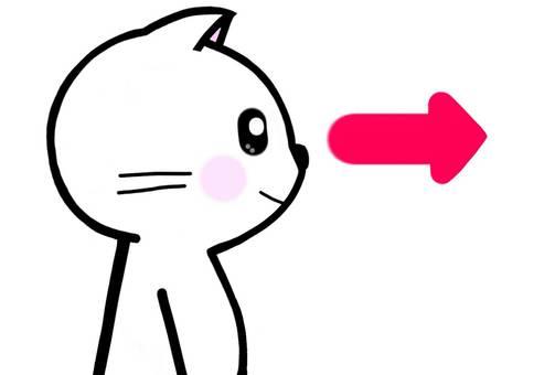 Arrow looking at eyes cat