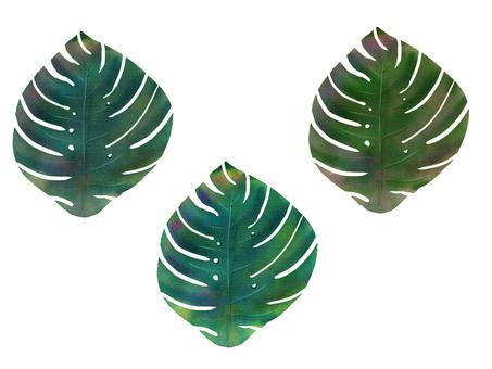 Resort style Leaf Monstera
